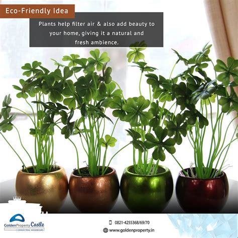 beautiful indoor plants 55 easy to maintain beautiful variety of indoor plants to