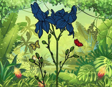 fiori di iris disegno fiore di iris colorato da utente non registrato il