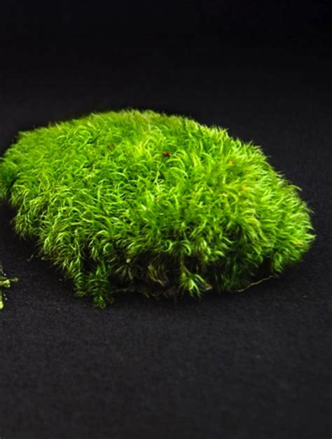 knowing your acrocarp from your pleurocarp moss and