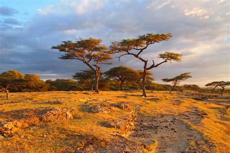 Landscape For Sale South Africa Bishangari Lodge Meanderings Musings
