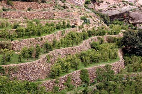 Yemen Hopes to Attract U.S. Investors in Reborn Coffee Industry   Daily Coffee News by Roast