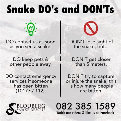 snake do s and don ts blouberg snake rescue