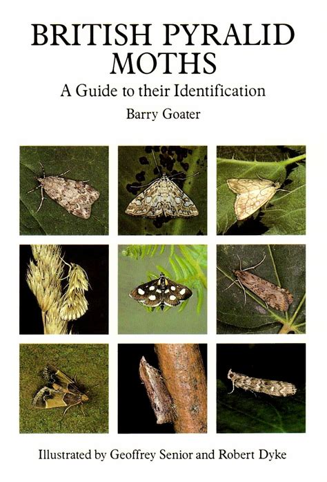 a guide to identifying your home d 233 cor style british pyralid moths a guide to their identification