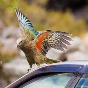 parrot steals man s money and a jaunt ca travel