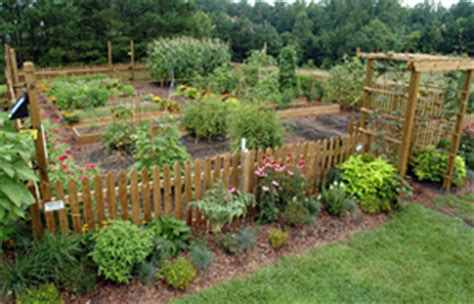 Dispose Of Pressure Treated Lumber Properly Growing A Treated Pine Vegetable Garden
