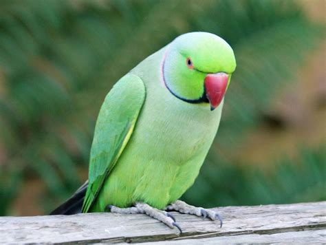 know about top 10 smartest talking birds 171 photo bagh