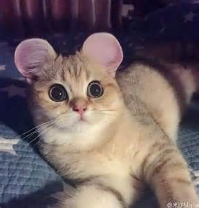 learn how to give your cat these adorable mouse ears