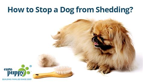 how to stop shedding how to stop shedding