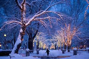 snow white lights lights quero neve snow trees winter image 117700 on