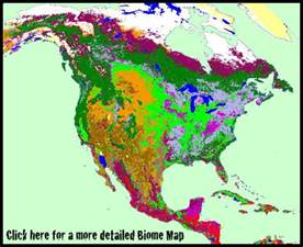 World Map Of Biomes by Gallery For Gt World Biome Map