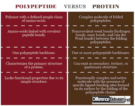 protein vs polypeptide difference between polypeptide and protein difference