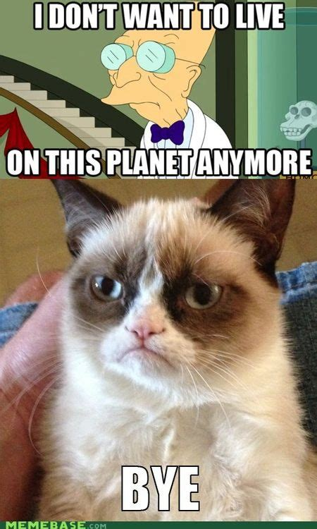 Grumpy Meme Face - grumpy cat meme facebook image memes at relatably com