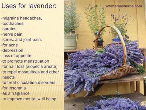 uses for lavender health pinterest