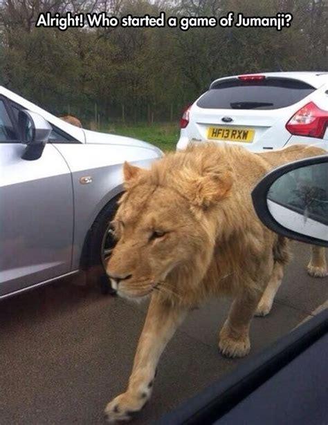 Lion Meme - african lion memes
