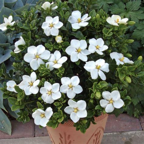 wann bekommt zã hne schattenpflanzen f 252 r terrassen welche nicht sonnig sind