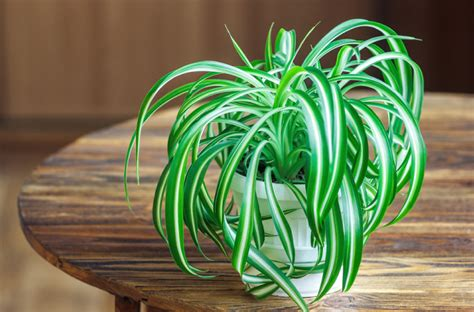 sunlight l for plants 6 plants that can grow without sunlight