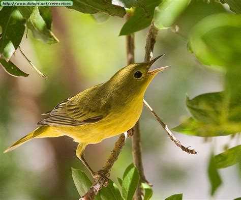 birds photos iii