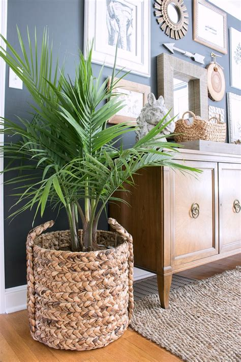 in door plants pot three four plants argements video one beautiful basket eight everyday uses