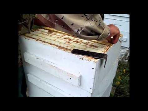 honey amy vachal beekeeping მეფუტკრეობა biogeorgia doovi