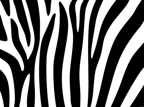 zebra template zebra stripes design psdgraphics