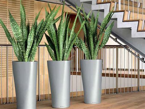 Flower Vase Rental Zeylanica
