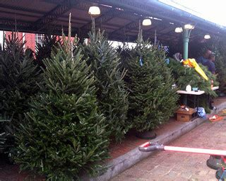 eastern market detroit christmas tree the hill is home tree shopping guide the hill is home