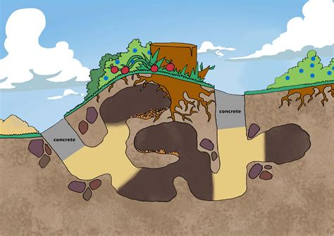 How Do You Get Rid Of Groundhogs Shed by Groundhog Problem In St Louis Wildlife Command Center Mo