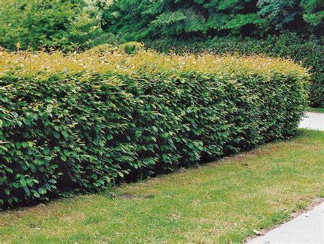 Garten Blumen Kaufen 867 by Pflanzen Kaufen Bei Obi Obi Ch