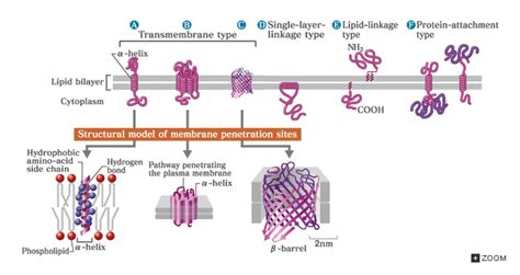 introduction  biology molecules  cells cells
