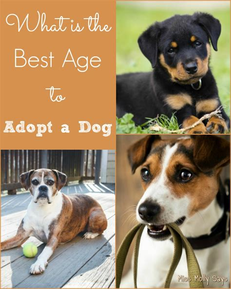 what age is a puppy what is the best age to adopt a miss molly says