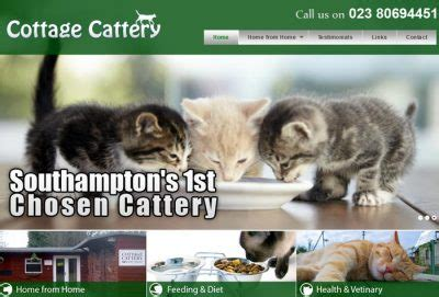 catteries uk boarding cattery directory
