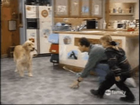 dog on full house full house dog gif find share on giphy