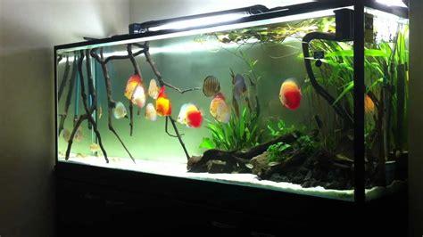 vasca discus my discus aquarium 19 10 2011