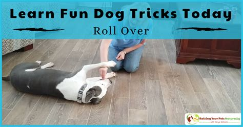 how to dogs tricks how to teach your tricks archives raising your pets naturally with tonya wilhelm