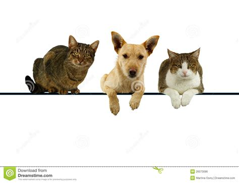 cat and puppy and cats a blank banner royalty free stock image image 26073096