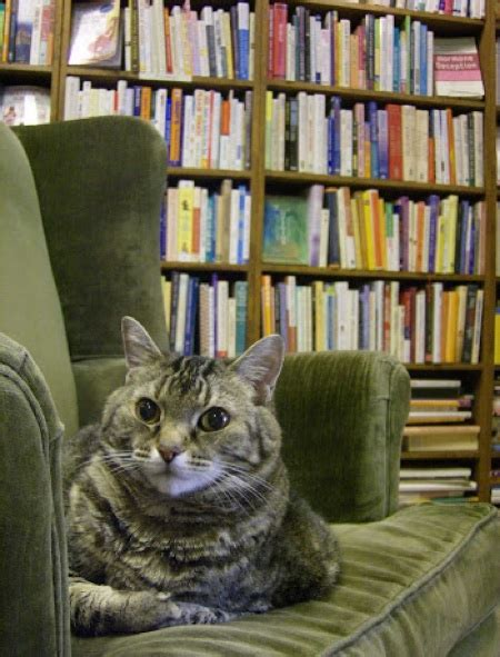 cats and bookstores fewer things go together better catster