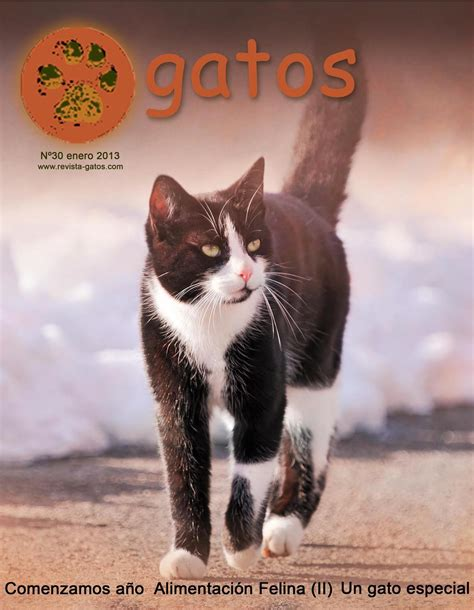 imagenes viernes gatos revista gatos n 30 by revista gatos issuu