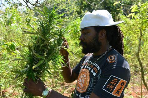 jamaica ganja tour underground cannabis