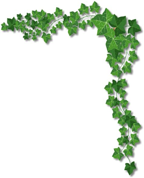 ivy border png www pixshark com images galleries with