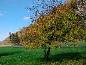 piccoli alberi da giardino i migliori piccoli alberi da giardino russelmobley