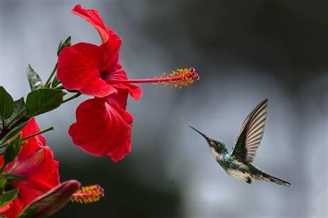 images of beautiful flowers 1000 beautiful beautiful flowers photos 183 pexels 183 free