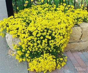 best plants for rock gardens gardens sun and spring