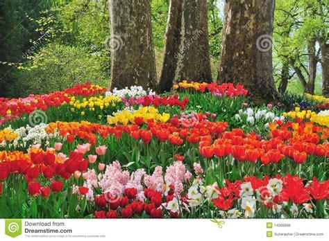 imagenes de flores y arboles flores hermosas debajo de tres 225 rboles imagen de archivo