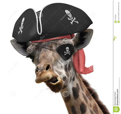 Giraffe Hat Meme - funny animal picture of a cool giraffe wearing a pirate