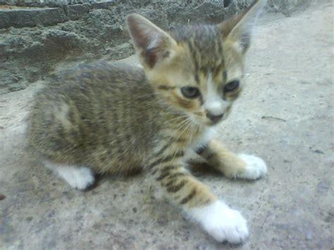 So Untuk Kucing Anggora by Syazwan Tahir Adakah Aku Rasis