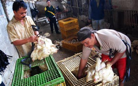 Bibit Ayam Negeri mentan diminta tak musnahkan semua enam juta bibit ayam