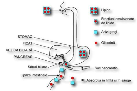 nutzfläche wohnung definition amg biochimie c 3 metabolismul