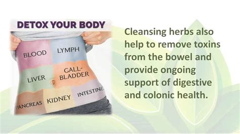Does Speed Detox Flush The Waste Work by What Does A Colon Cleanse Do