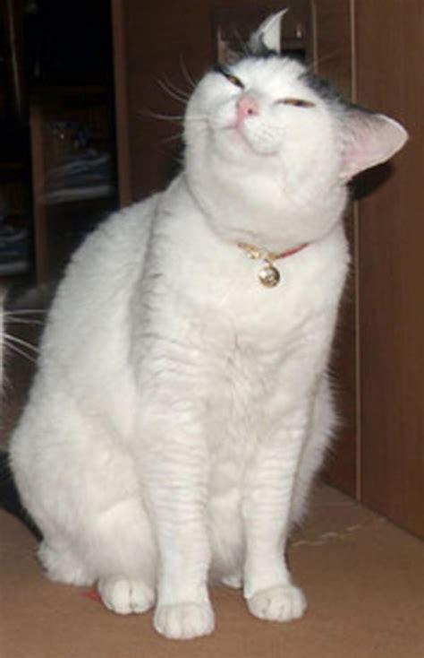 Cat Meme Faces - original cat face smug cat know your meme