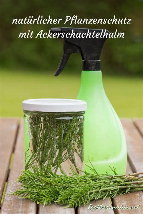 Was Machen Gegen Pilze Im Garten by Nat 252 Rliche Pflanzenschutzmittel Mit Ackerschachtelhalm
